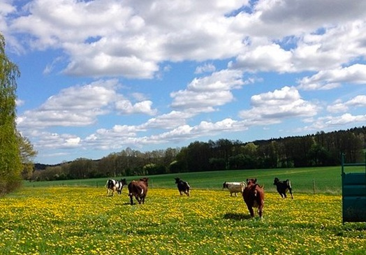 farm-image-2